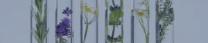 Flowers in test tubes