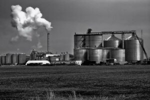 Soybean meal or canola meal in combination with distillers' grains?