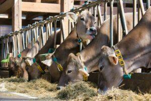 Rumen-protected folic acid supplementation in dairy cows