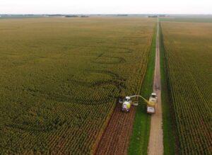 Harvesting corn fields