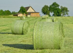 Is forage necessary on the diet of pre-weaned heifers?