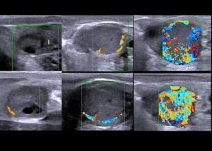 Detection of open cows by Color-Flow Doppler Ultrasound