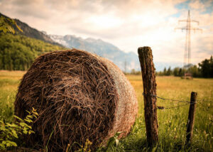 Effect of climate change on meadow hay nutritive value