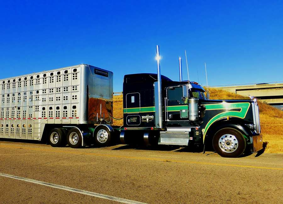 Importance of a diet prior to transport in young calves