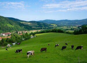 El nitrato reduce las emisiones de metano ruminal