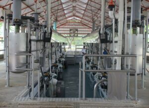 Automatic cluster removal systems and milking performance