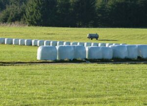 Strategy to harvest silage of regrown Timothy grass