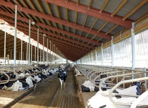 Relationship between bedding material, udder hygiene and milk quality