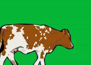 Optimizing heifer insemination time with sexed semen