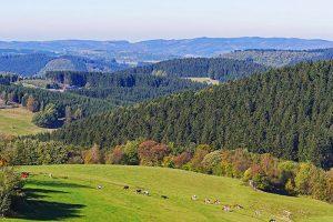 Cómo-influye-en-la-salud-de-las-vacas-lecheras-la-intensificación