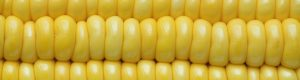 Dellait Knowledge Center - Feeds - Energy Concentrates - Cereal Grains