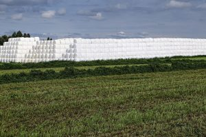 Fuentes alternativas de forrajes de paja de trigo y rastrojo de maíz