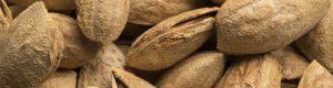 unpeeled-almonds-P4MN26S (1)