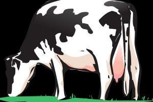 vaca-manejo